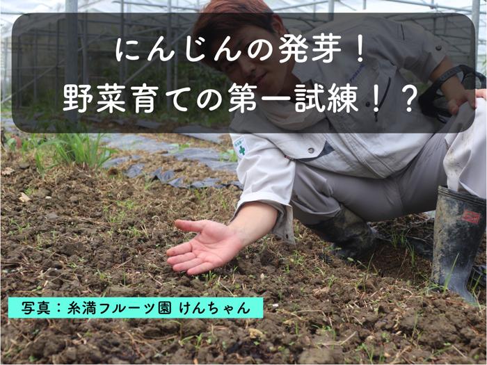にんじんの栽培について解説