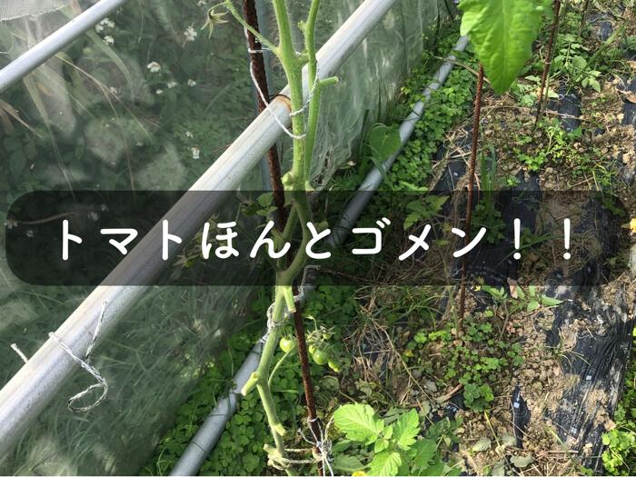 トマトの栽培の失敗談