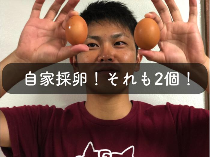 養鶏で時差採卵をしました