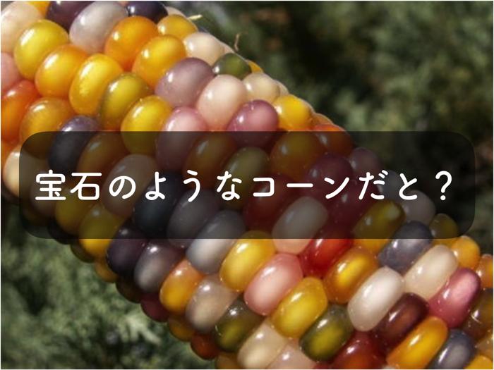 グラスジェムコーンの特徴や栽培方法