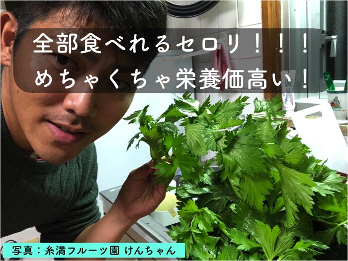 セロリの栽培方法や栄養価について