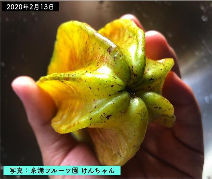 形が珍しいスターフルーツ