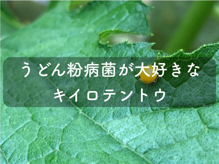 黄色いテントウ