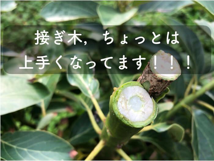 熱帯果樹の接ぎ木の方法