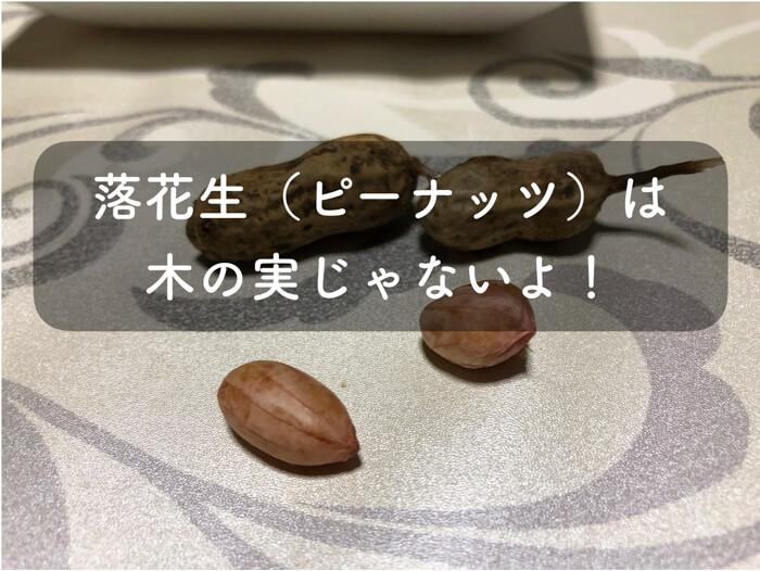 ピーナッツと言われる落花生!実は,地中で実を結ぶ豆なのです!ナッツ類ではない!