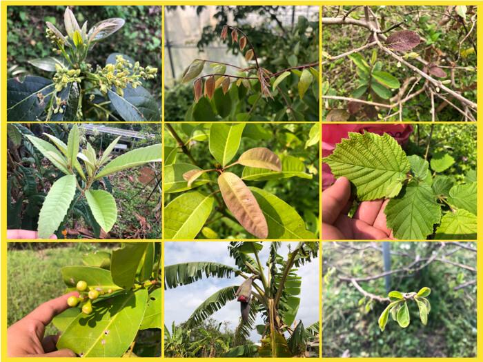 来春!いろんなフルーツの新芽や蕾が出てきました!16種類のフルーツ,あなたはいくつ分かるのか!?