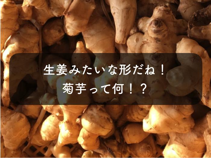 生姜に似ているけど,実は芋!?「菊芋」について解説!