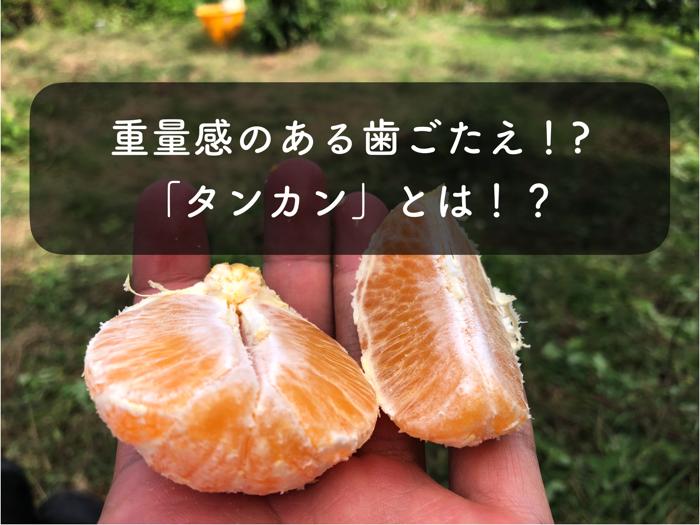 沖縄,冬の名物みかん!「タンカン」の特徴や栄養素,効能について紹介!