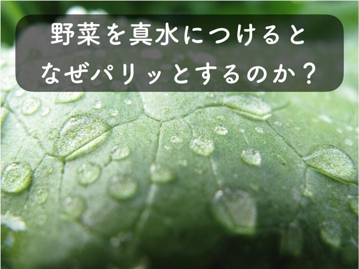 レタスなどの野菜を真水につけるとパリッとする理由は,浸透圧により水分子が野菜の細胞内に入り膨らむから!?