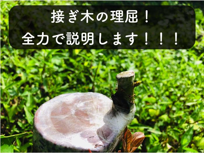 【接ぎ木】実際に果樹栽培している生産者が,「接ぎ木」の理屈について徹底解説!