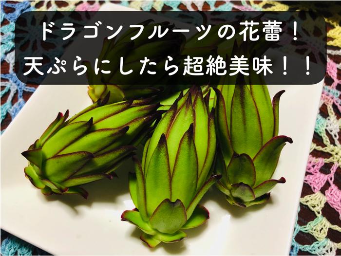 ドラゴンフルーツの花の蕾の天ぷらの作り方と味について!!【超美味しい!!!】