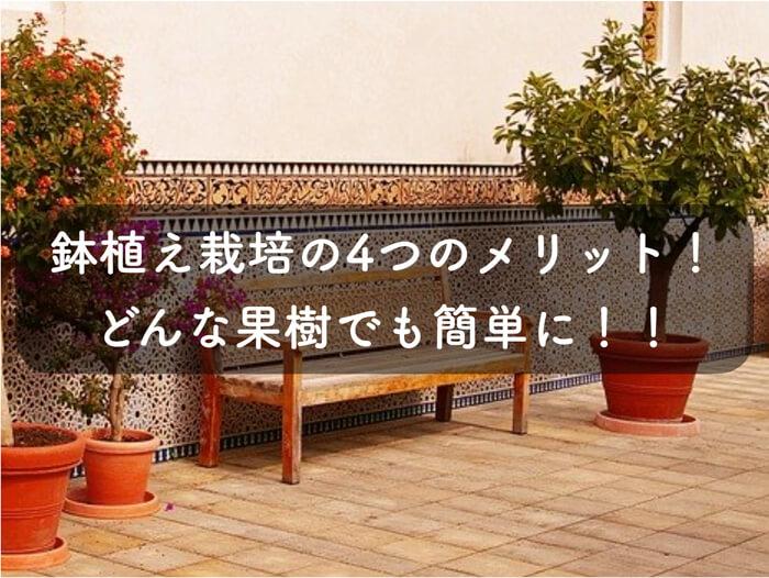 【家庭菜園】鉢植え栽培(プランター栽培)の4つのメリット!庭や畑に地植えするよりも良い!【果樹栽培】