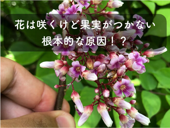 花は咲くけど果実がつかない理由!根本的な原因があるかもしれません!