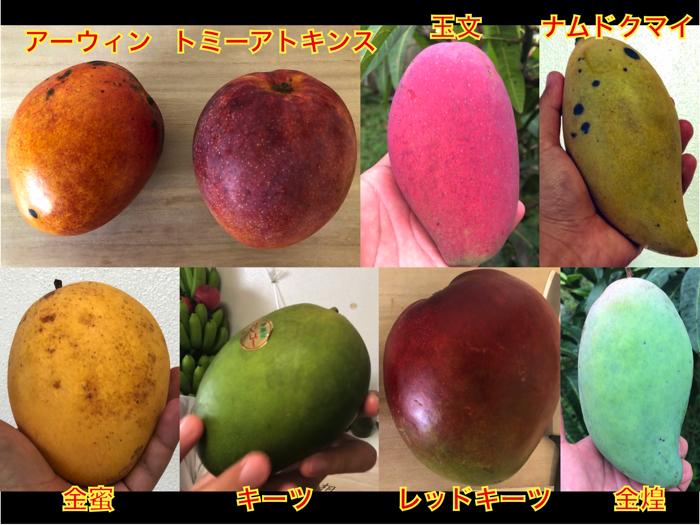 【決定版】絶対食べておきたいマンゴーの種類8選