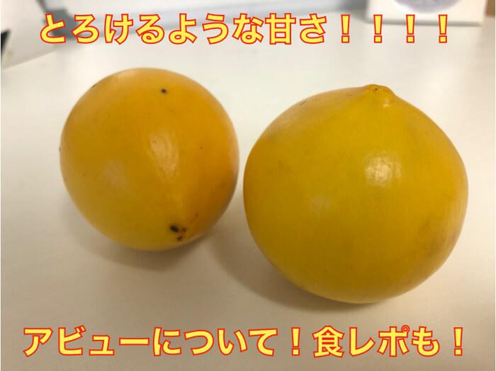 【激レア熱帯果樹】とろけるような甘さ「アビュー」の解説と食レポ!糖度は何度!?