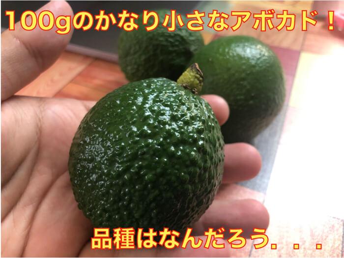 【100gのアボカド】沖縄本島や石垣島で出回る小さいアボカドを食べてみた!