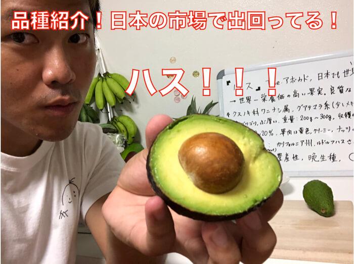 【アボカド品種紹介】日本の市場でほぼ100%出回っている「ハス」という品種の徹底紹介!