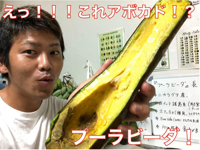 【アボカド品種紹介】びっくりするほど長い品種「プーラビーダ」の特徴と食レポ!