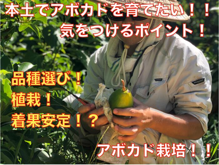 【アボカド栽培22】本土でアボカドを育ててみたい方必見!品種の選び方や木の仕立て方など!