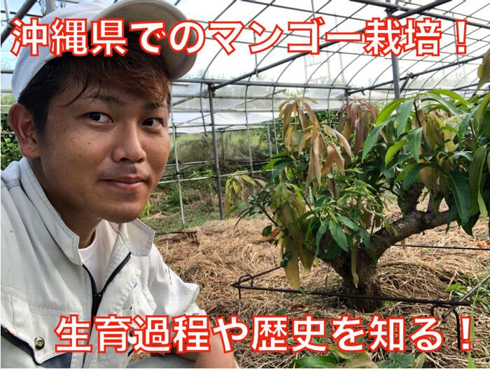 【マンゴー栽培9】沖縄県のマンゴー栽培の礎!基本的なことを学ぶ!