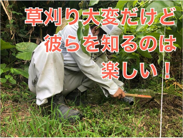 なぜイネ科の雑草の草刈りは大変なのか!?恐竜の絶滅から垣間見える植物と動物の戦い!