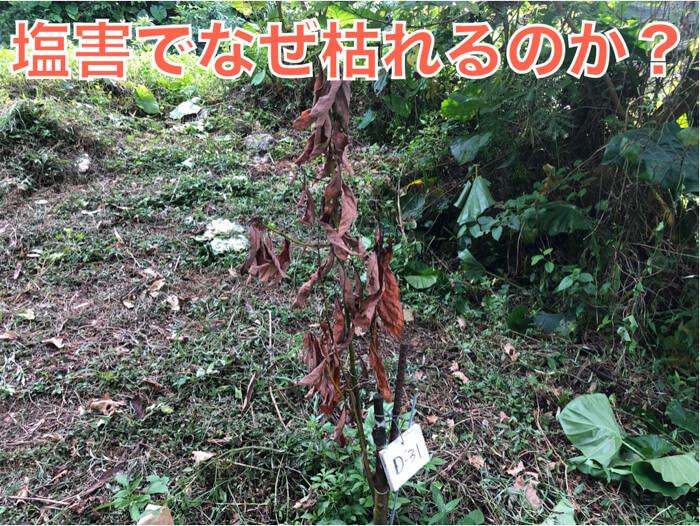植物の塩害についてわかりやすく解説!
