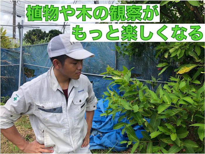 【植物理解3】植物を個体と見るのか?それとも集合体とみるのか?植物観察が楽しくなる!