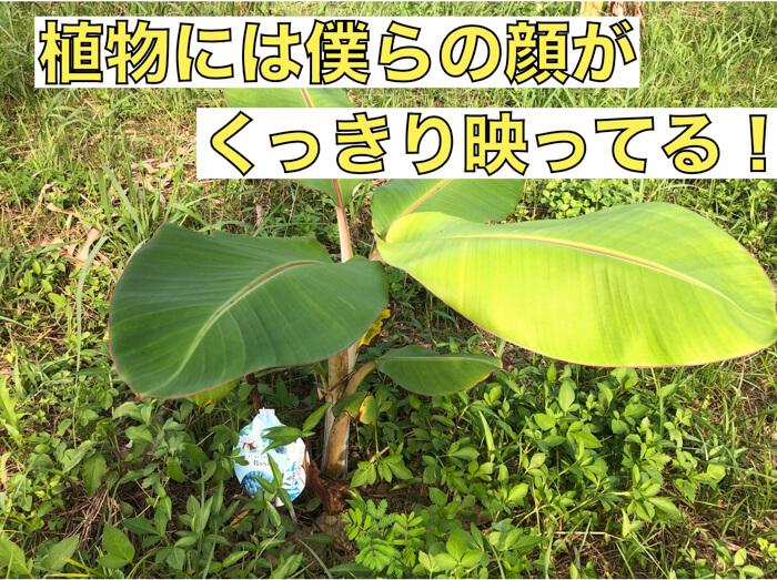 【植物理解4】植物には僕らの顔や姿がくっきりと映っているのかもしれない!?