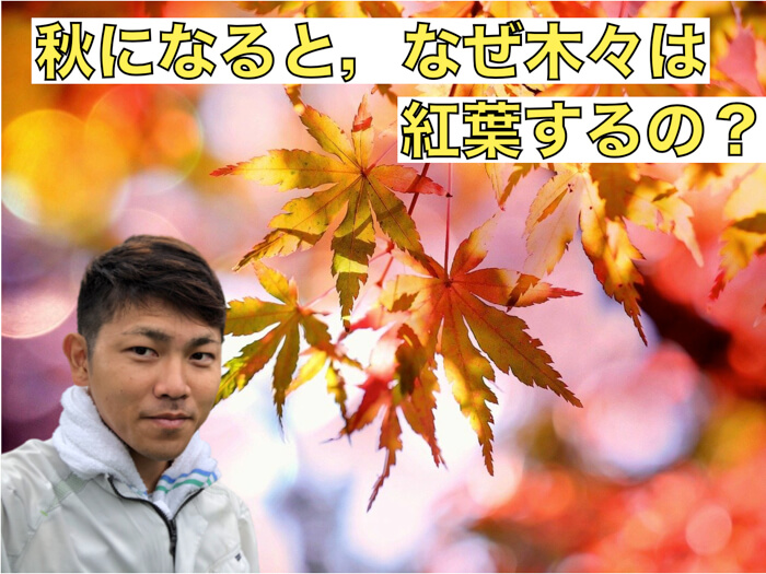 【植物理解5】秋になるとなぜ木々は紅葉するのか?赤くなったら何が嬉しいの!?