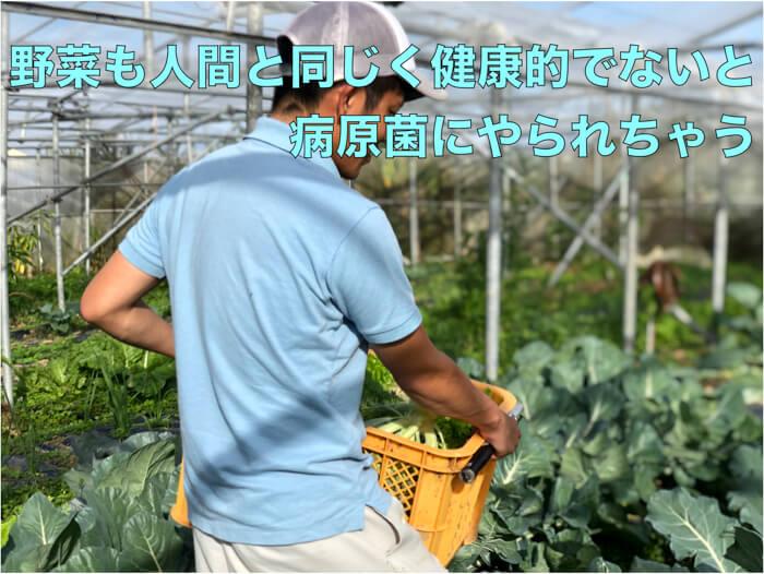 虫に食べられる野菜も,菌にやられて病気をしてしまった野菜も,同じ.