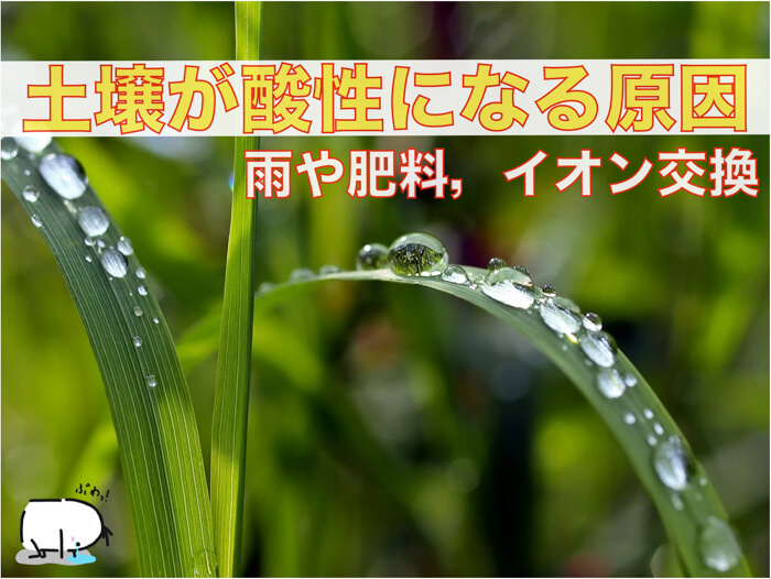日本の土はなぜ酸性に傾いてくるのか?