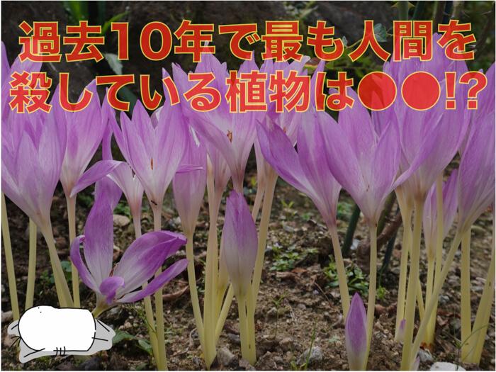 過去10年で最も日本人を殺している植物は〇〇だった!