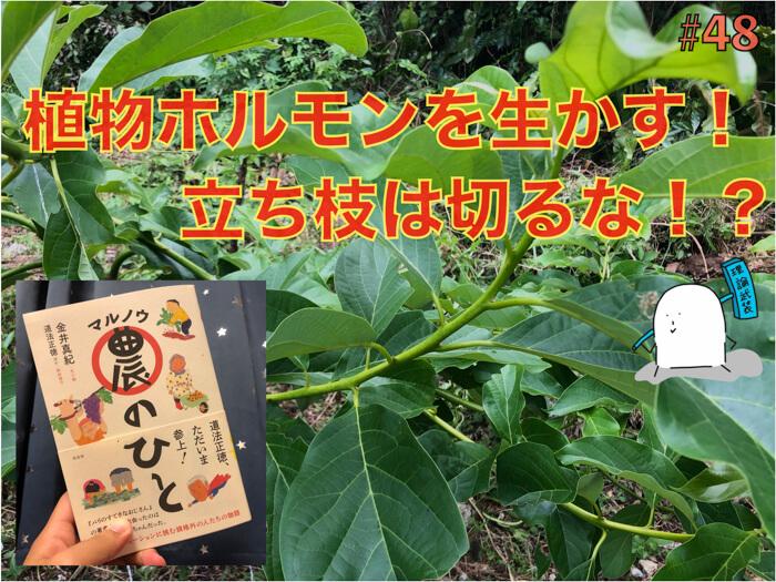 【マル農のひと】植物ホルモンを十分に生かすためには,植物はぎゅっと縛ると無農薬でも立派に育つ!?