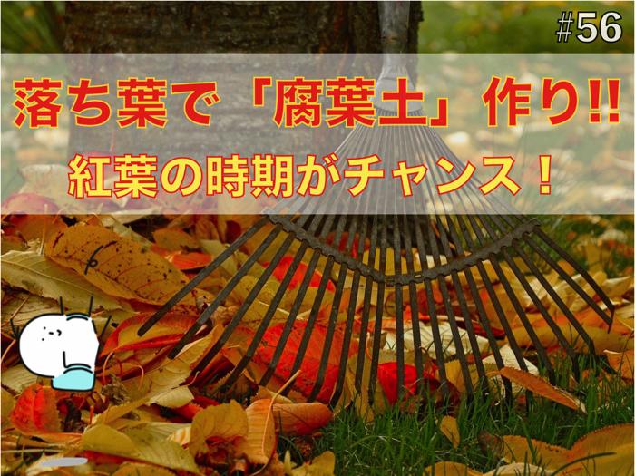 紅葉の季節は「腐葉土」作りの大チャンス.