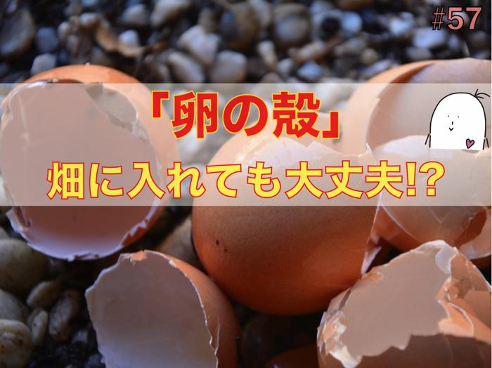 卵の殻は畑に入れるとどのような効果が期待できるのか!?石灰やカルシウムの話.