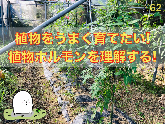 植物ホルモン「オーキシン」の動きを説明してみる!