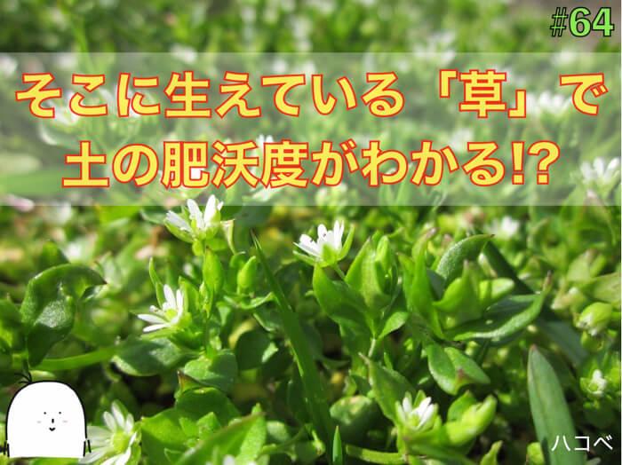 そこに生えている草で畑の状態がわかる!【画像付きで徹底的に紹介!】