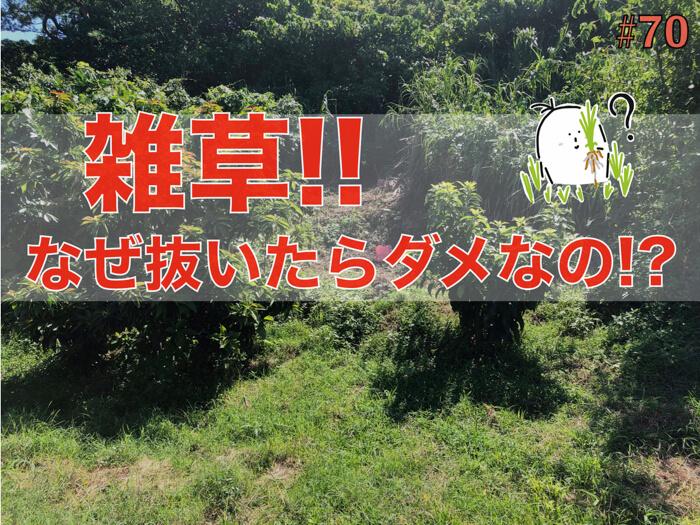 【注意!】雑草は根っこから抜いてはいけない!?