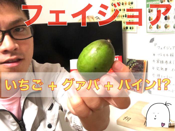 フェイジョア食べてみた!食レポ!特徴・解説!【グァバのような熱帯果樹!】