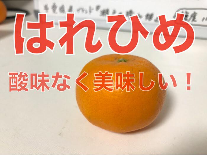 【愛媛・柑橘】「はれひめ」の食レポ!特徴!酸味がなくて甘さスッキリ!美味しい!