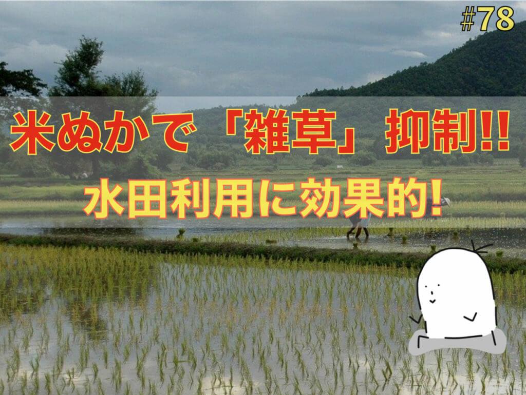 米ぬかが,水田(すいでん)の雑草防除に効果的!?