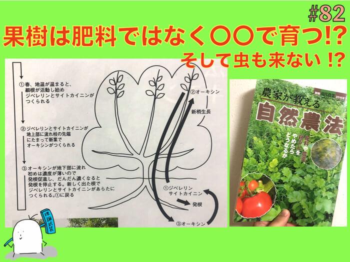 植物は肥料ではなく〇〇で動く!?病害虫のつかない強い木を育てるための理解.