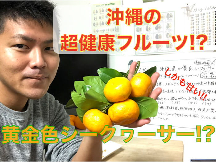 【超健康フルーツ】沖縄の赤くて甘い「クガニー」!!実はシークヮーサー!食レポ・解説!【糖度も高くてびっくり!】
