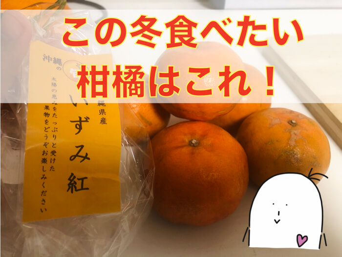 【いずみ紅】沖縄の甘くて糖度の高い希少な柑橘!紹介!糖度計測まで!