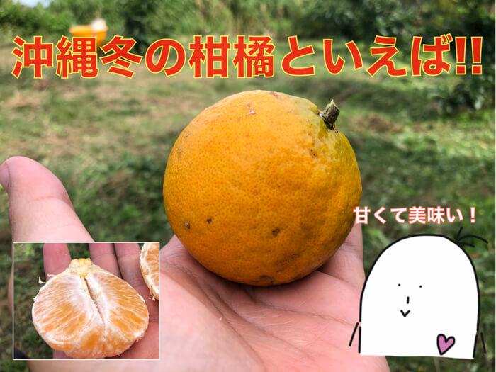【タンカン】沖縄の冬の代表柑橘といえば「タンカン」!特徴・食べ方・食レポ!糖度まで!