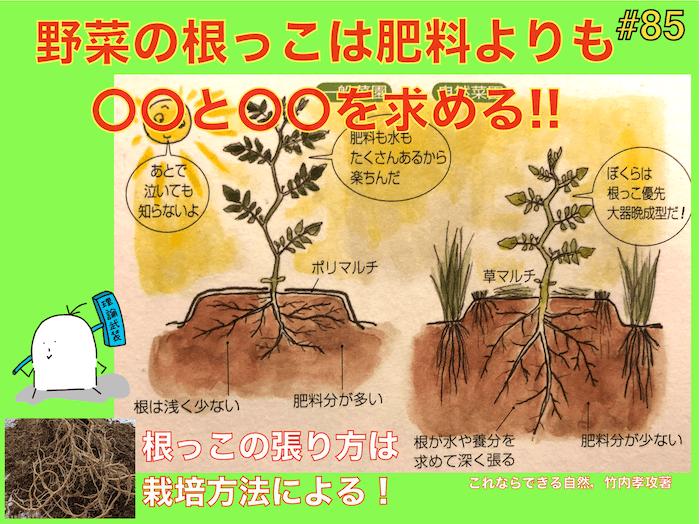 野菜の根っこは肥料よりも〇〇と〇〇を好む!ポットを見てみて!自然栽培の利点!