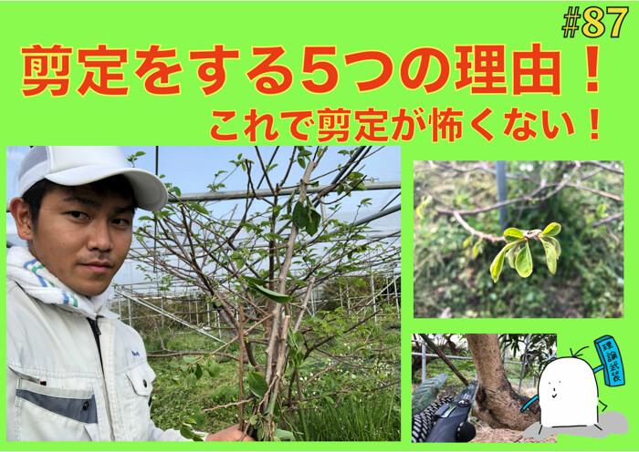 【果樹栽培】剪定が必要な5つの理由について!!なぜ枝を切る必要があるの!?