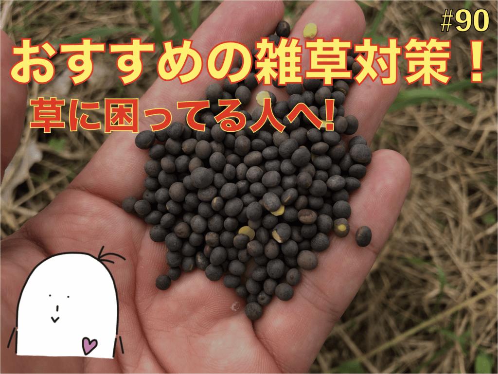 【マメ科植物】ヘアリーベッチという草の魅力!果樹園や野菜の畑に相性が良い草!