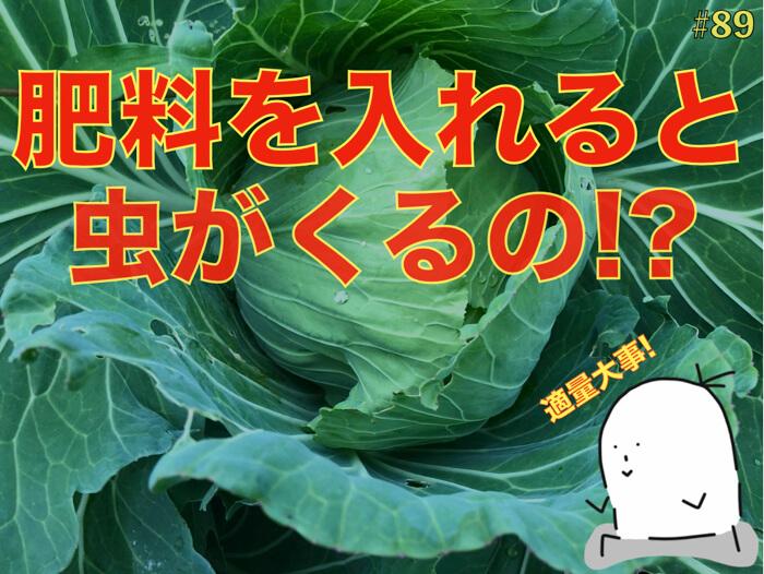 【野菜作り】肥料を入れすぎると虫に食べられる謎!【有機栽培】