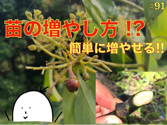 【増殖】植物の増やし方,もしくは増え方.有性生殖と無性生殖!